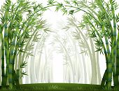 picture of bamboo forest  - Bamboo forest when it full of fog - JPG