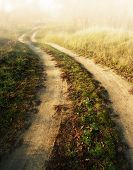 stock photo of dirt road  - autumn landscape forest and dirt road on a sunny day  - JPG
