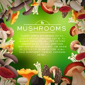 picture of morel mushroom  - Mushrooms frame with white text and blur background - JPG