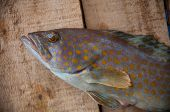 image of fresh water fish  - Fresh fish from the sea on wooden background - JPG