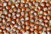 stock photo of hazelnut  - Nuts - JPG