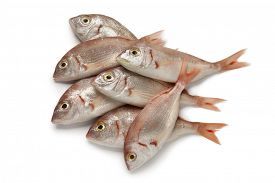 stock photo of red snapper  -  Fresh raw small red snappers on white background - JPG