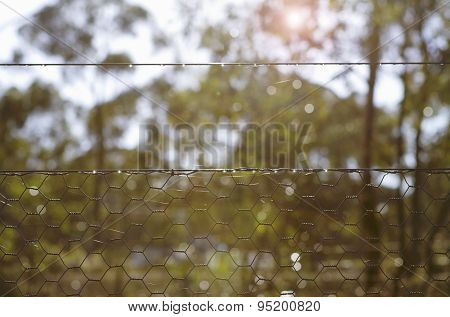 Background Morning Bush Setting Looking Through Chicken Wire Fence