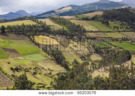 Cultivated fields on slopes Andean