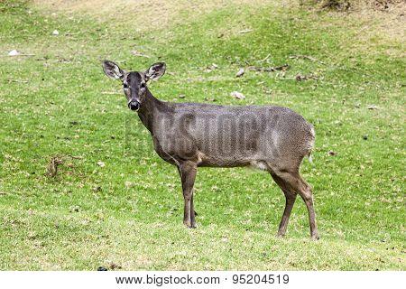 Whitetail deer hatchery