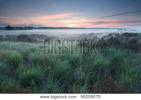 Beautiful Misty Morning On Marsh