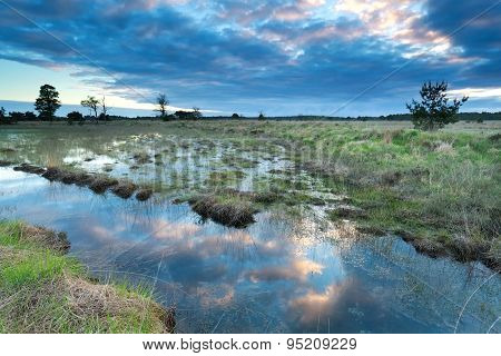 Morning Sky Reflected In Swamp Water