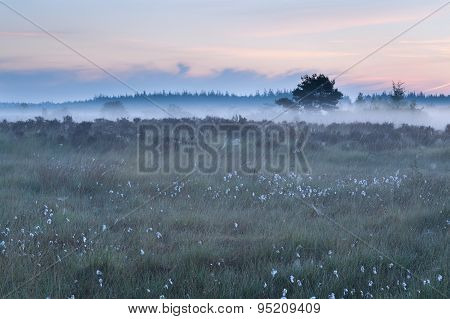 Misty Morning On Marsh