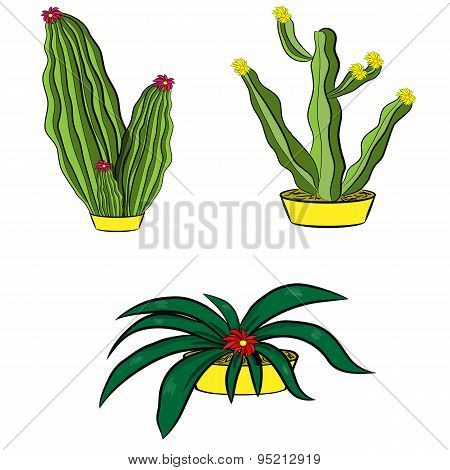 Set Of Mexican Cacti With Flower On A White Background