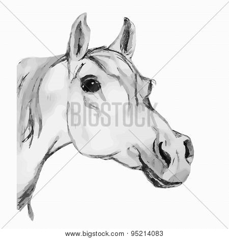Arabian Horse, Horse (head). Gray Tone.
