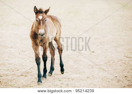 Close Up Portrait Of Brown Foal