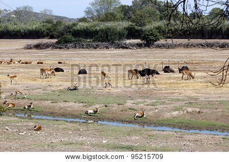 Animal Trafic