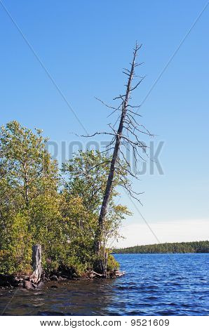 Dry Tree On Midday  Lake