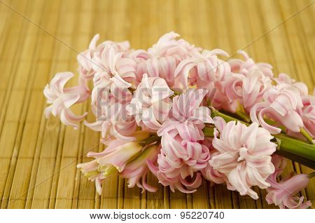 Ffresh Flowers Hyacinths On Wooden Planks