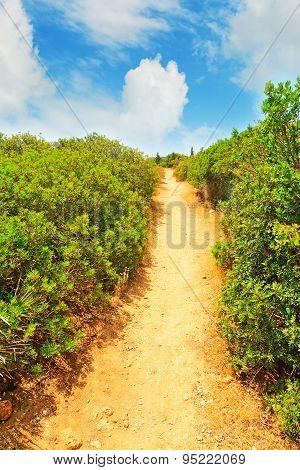 Walk Path Through The Bushes