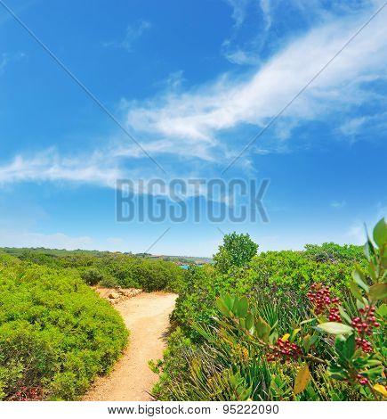 Walk Path In Alghero Coastline