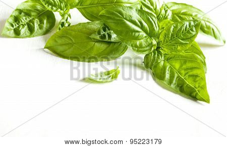 Fresh Basil Leaves  White Wooden Background. Food Background With Copy Space