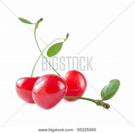 Three Scarlet Cherries