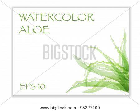Watercolor Aloe In Corner