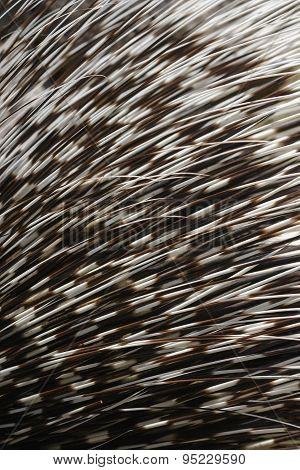 Hedgehog Needles Texture
