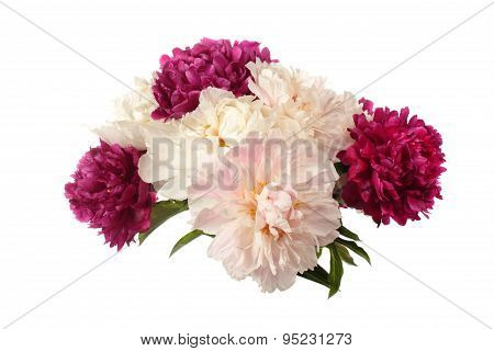 Different Color Peonies