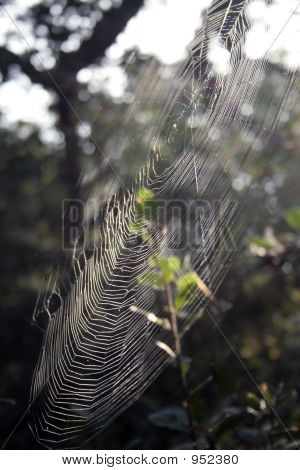 Orb Weaver Web, Side View