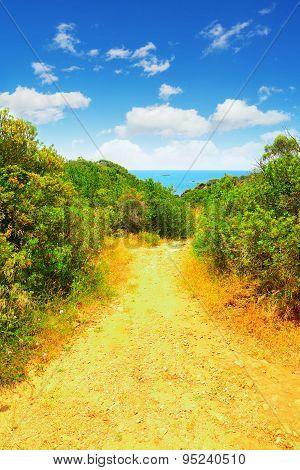 Path To The Sea In Sardinia