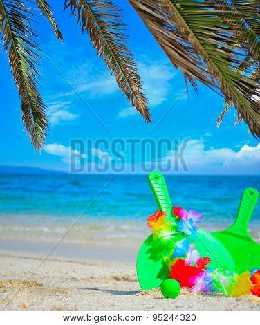 Palm Branches And Beach Rackets