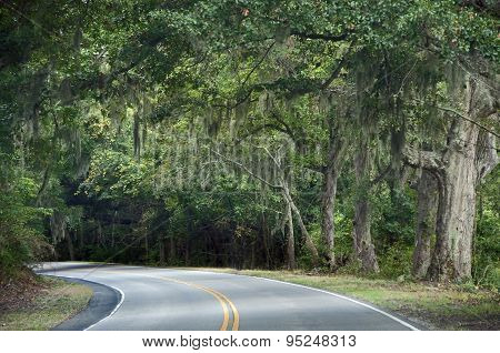 Driving on Edisto