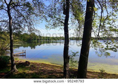 Idyllic summer pond