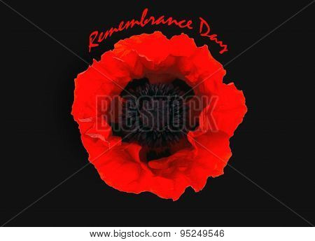 One Red Poppy Isolated