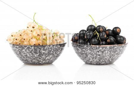 White And Black Currant