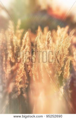 Beautiful high grass - grass seeds
