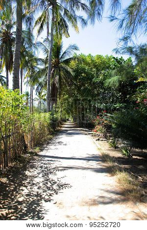 The Road In The Rainforest On The Island Of Gili Meno