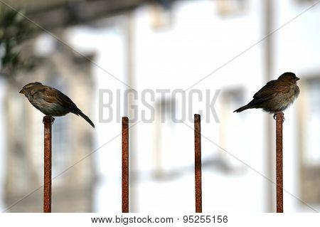 Upset birds