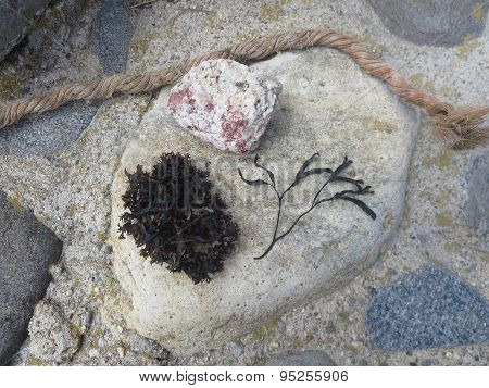 Beach Collage with Rock, Rope, and Seaweed