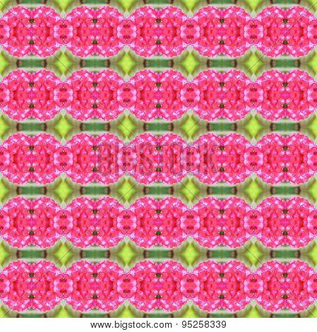 Pink Celosia Argentea Seamless