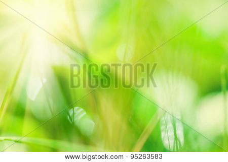 Blurred Abstract Background With Green Grass And Sunbeams