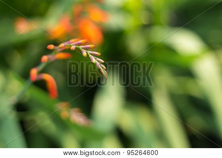Blooming Orange Fern