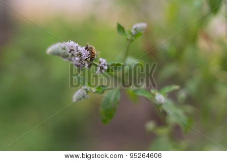 Bee Pollinating Light Purple Flower