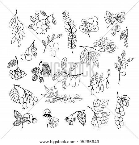 Set Of Garden And Wild Hand-drawn Sketch Berries