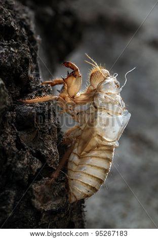 August beetle