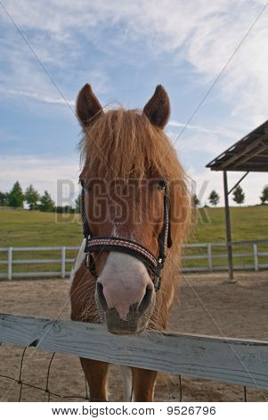 A Portrait Of A Horse Looking At The Camera Over A Fence