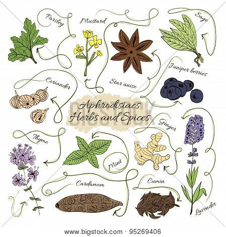Hand Drawn Vector Collection Of Spices And Herbs Aphrodisiacs