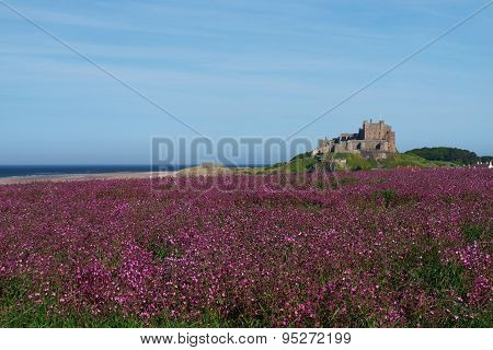 Field of Campion with North sea and Bamburgh Castle in background