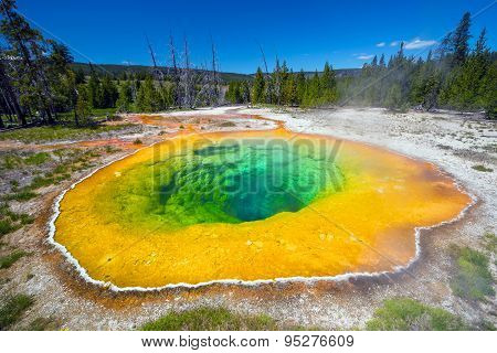 Morning Glory Pool In Yellowstone National Park Of Wyoming
