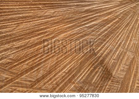 Abstract cut surface of a tree trunk