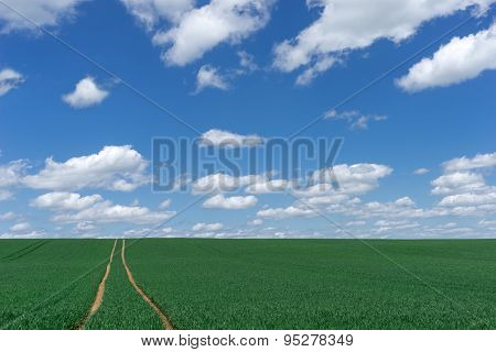 Way to the horizon through a green field