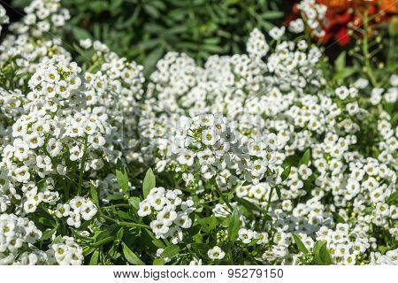 Lot Of Small White Decorative Florets