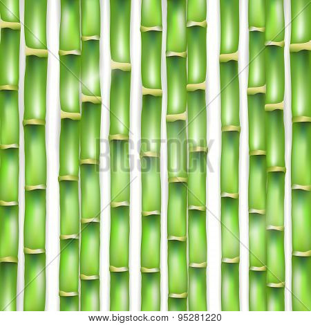 The vector green background made of a bamboo.